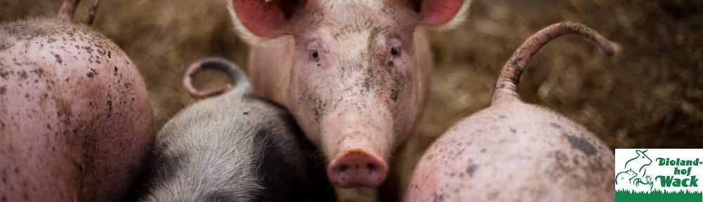 cropped-Schweine.jpg